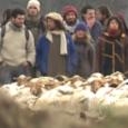 Nous avons terminé le tournage du documentaire Mouton 2.0 il y a un peu plus d'un an en janvier 2012. Aujourd'hui à la suite des nombreuses projections du film, une question revient souvent «Et maintenant où en sont les éleveurs qui refusent l'identification électronique ?» Réponse dans le petit reportage ci dessous :  Transhumance contre le puçage [...]